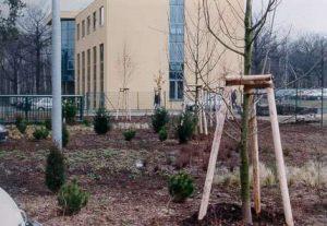 Bepflanzung eines Firmengeländes in Dresden